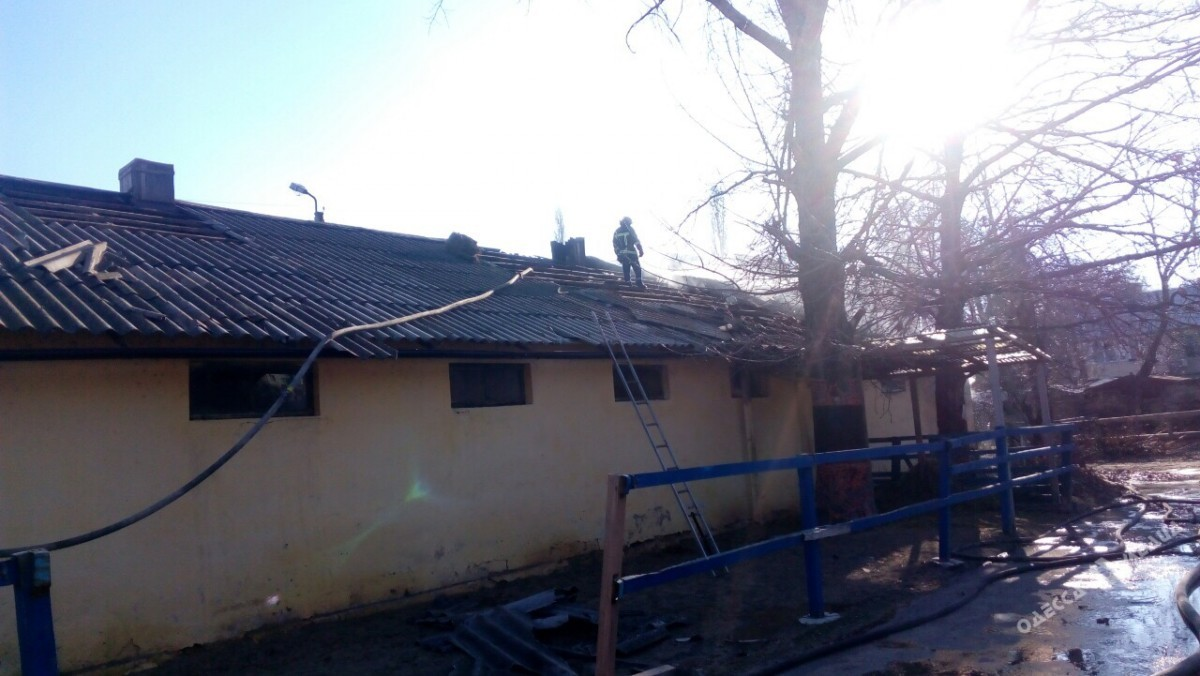 НаФонтане горела конюшня ипподрома: животных спасли рабочие учреждения