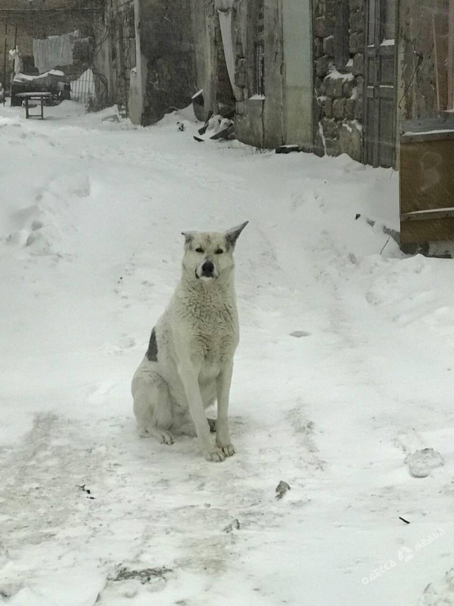 2652eac1bab16547b80e45909f05c182 Зимняя Одесса: пес-снеговик, одинокий Дюк и машины в сугробах