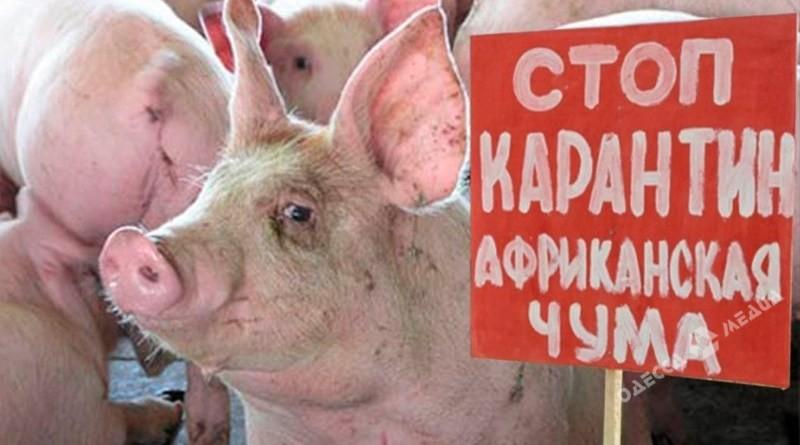 Вспышка африканской чумы свиней зафиксирована вСаратском районе