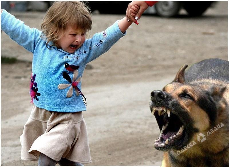 В Івано-Франківській області собака накинулася на маленьку дитину