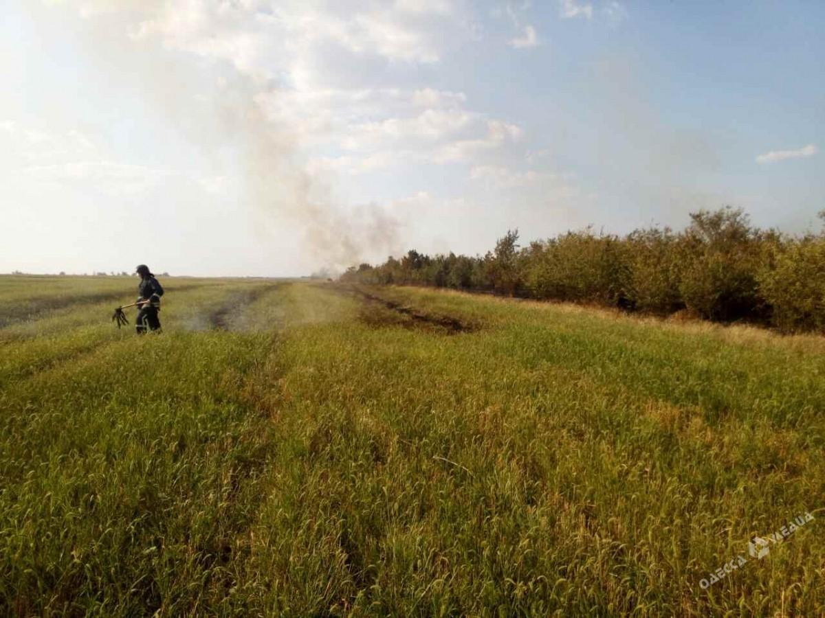 ВОдесской области горел хвойный лес