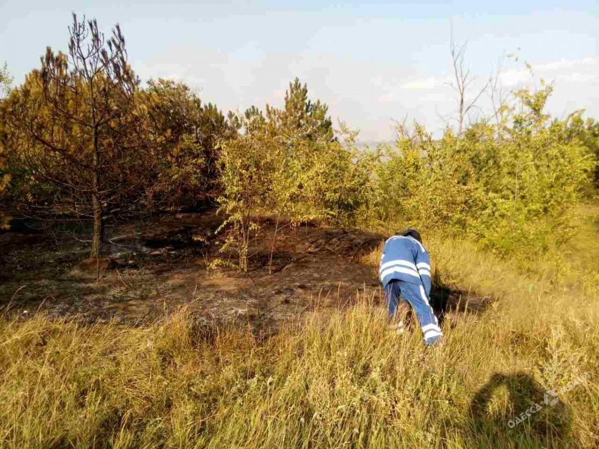 Лесной пожар наплощади 13 гектаров вОдесской области ликвидирован