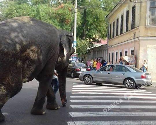 Немалое животное вышло прогуляться поцентру Одессы