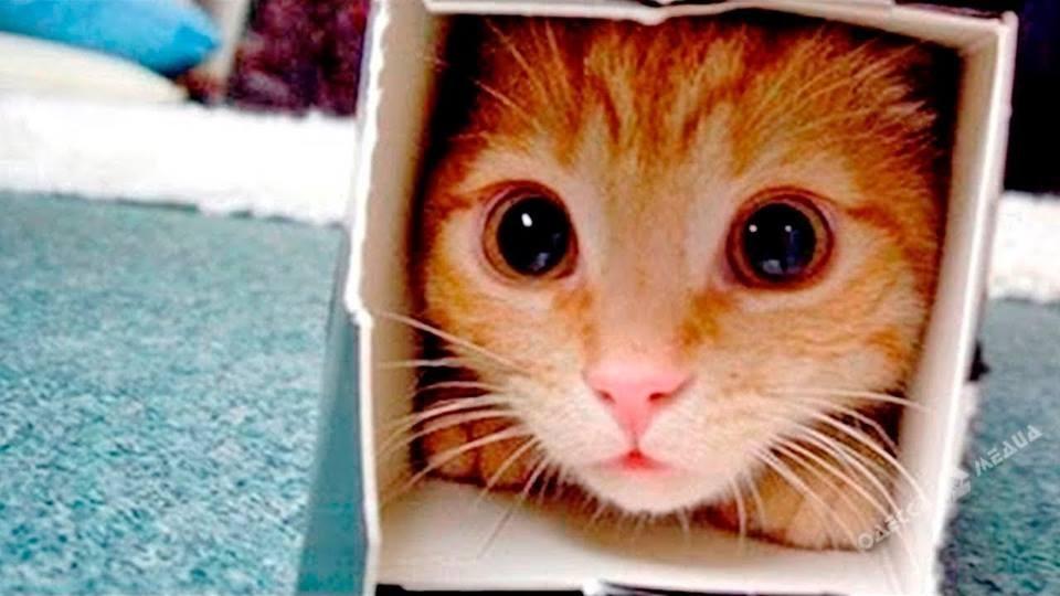 ВОдессе запретили ловить кошек