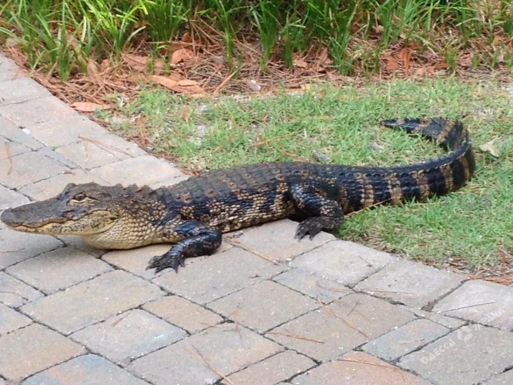 ВОдесской области намайские праздники сбалкона выпал крокодил