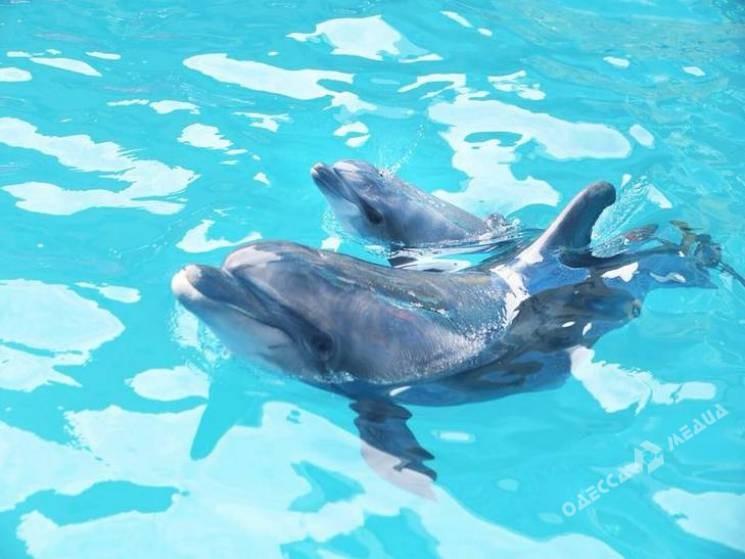 Водесском дельфинарии вовремя представления родился дельфиненок
