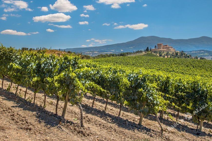 Первый в Украине кадастр виноградников появился в Одесской области