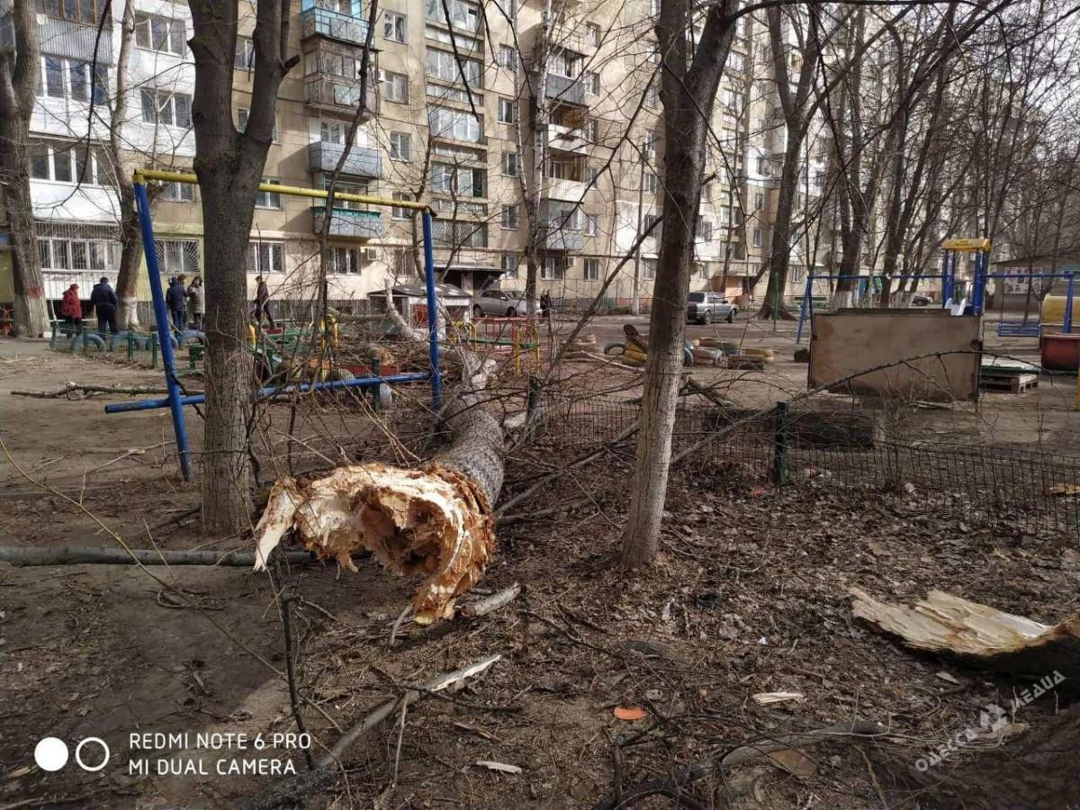 Ветер повалил дерево на детскую площадку в Одессе