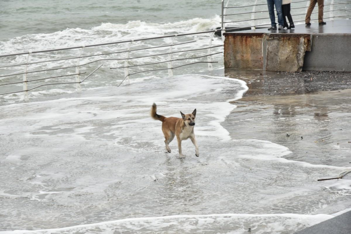 f46cb1a21af87e42dbecb67d756ff382 На одесском побережье бушует шторм