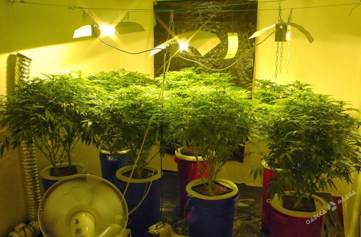 Лампа для выращивания марихуаны в помещении подходящие лампы для конопли