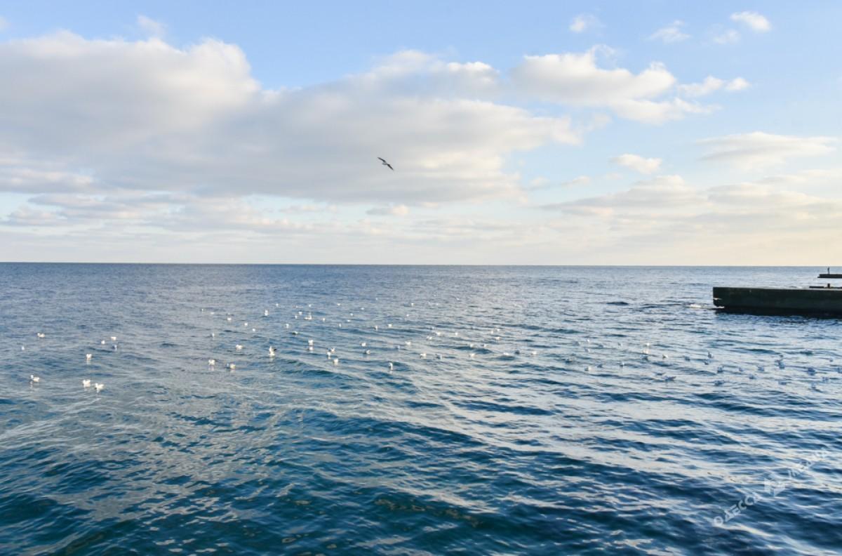 b3eb5bb3371266bef18b0e4fd2e0e762 Последний день осени одесситы встретили на море (ФОТО)