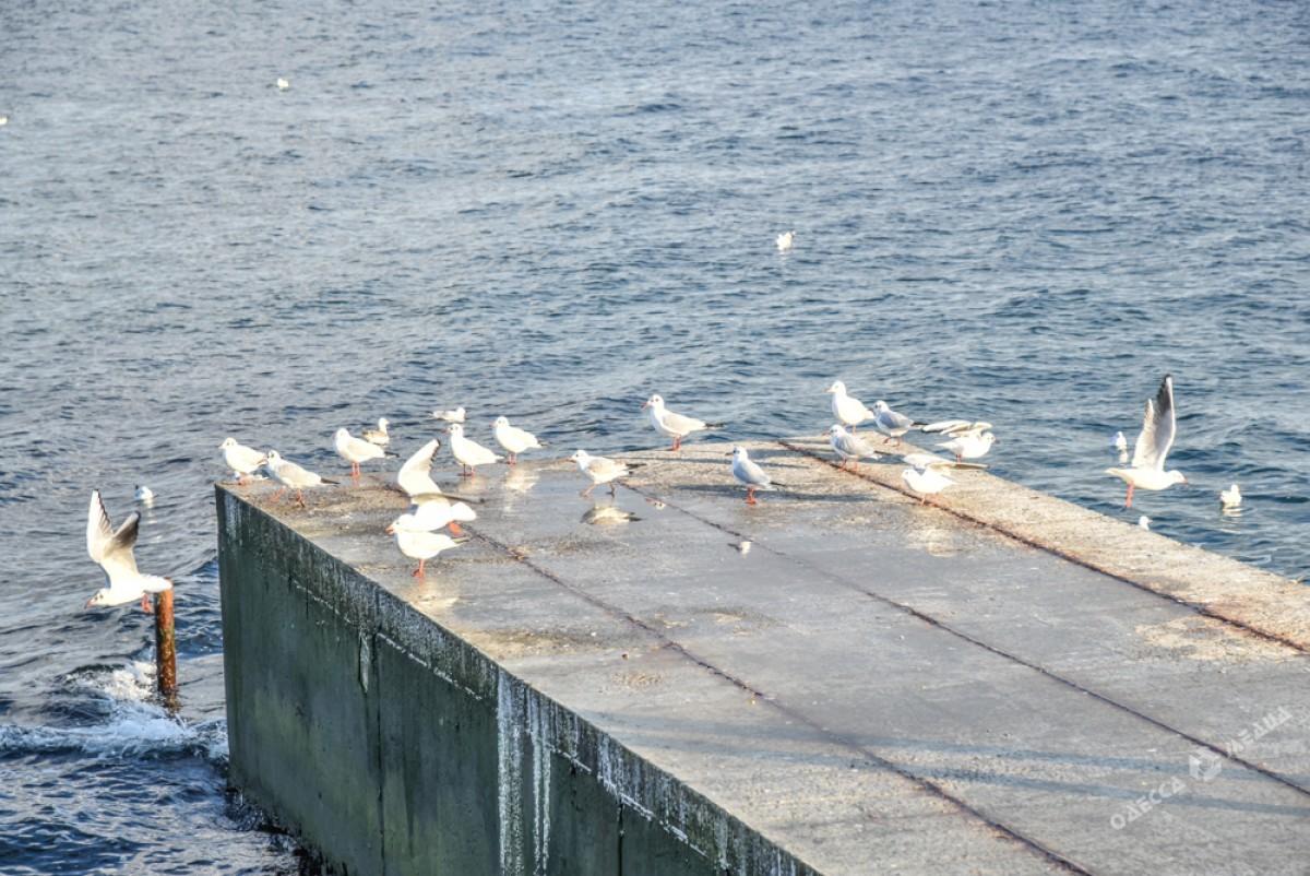 ea4eeae1b64265980537bcec32dce0ce Последний день осени одесситы встретили на море (ФОТО)
